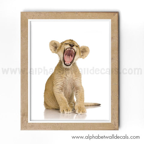 Baby Tiger Poster, Baby Animal Poster