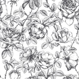 rose removable wallpaper