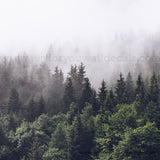 Woodland Forest Wallpaper - Foggy Forest Wallpaper