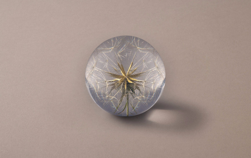 Tragopogon Large Paperweight