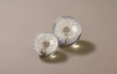 White Dandelion Large Paperweight