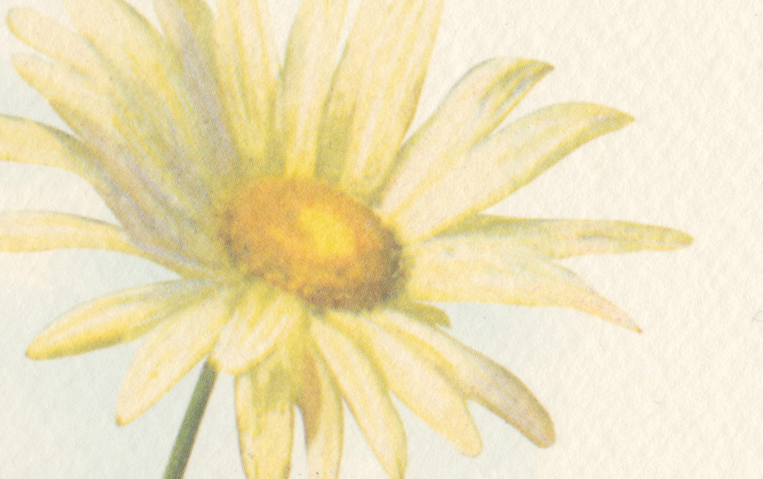 Daisies Greeting Card