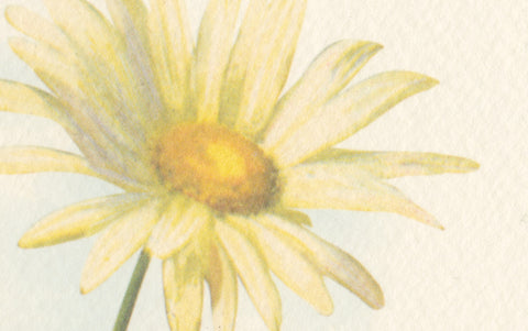Daisies Greetings Card