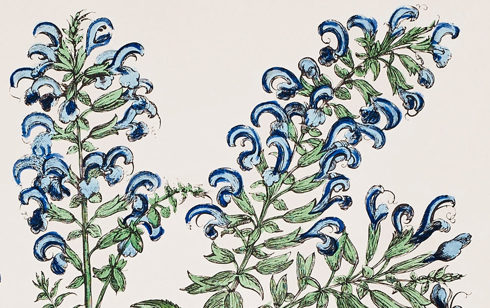 Italian Hand-Coloured Woodblock Print, Botanical Herbs