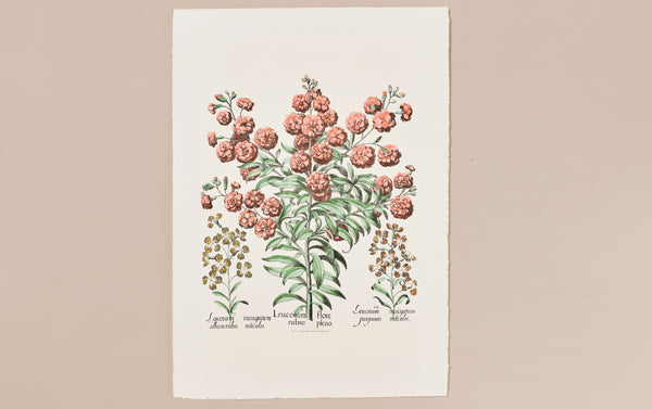 Italian Hand-Coloured Woodblock Print, Leucojum