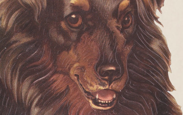Embossed Die Cut Greeting Card, Collie