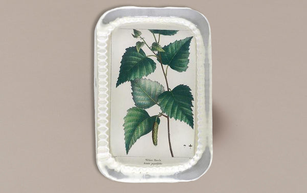 John Derian Paperweight, White Birch