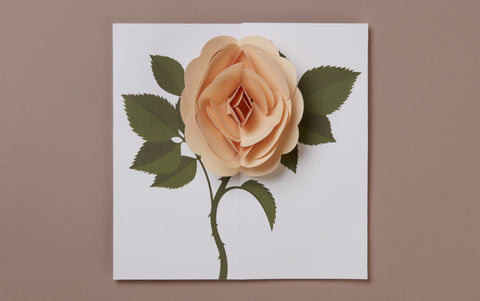 Peach Rose Pop-up card
