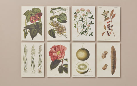 Set of 10 Assorted Botanical Postcards