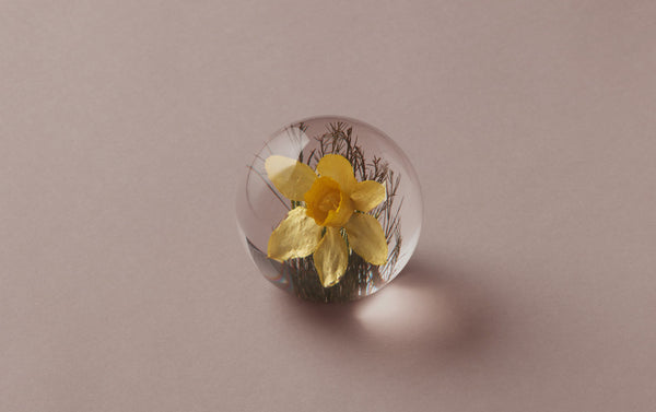 Yellow Daffodil Paperweight