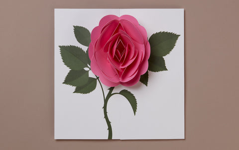 Pink Rose Pop-up card