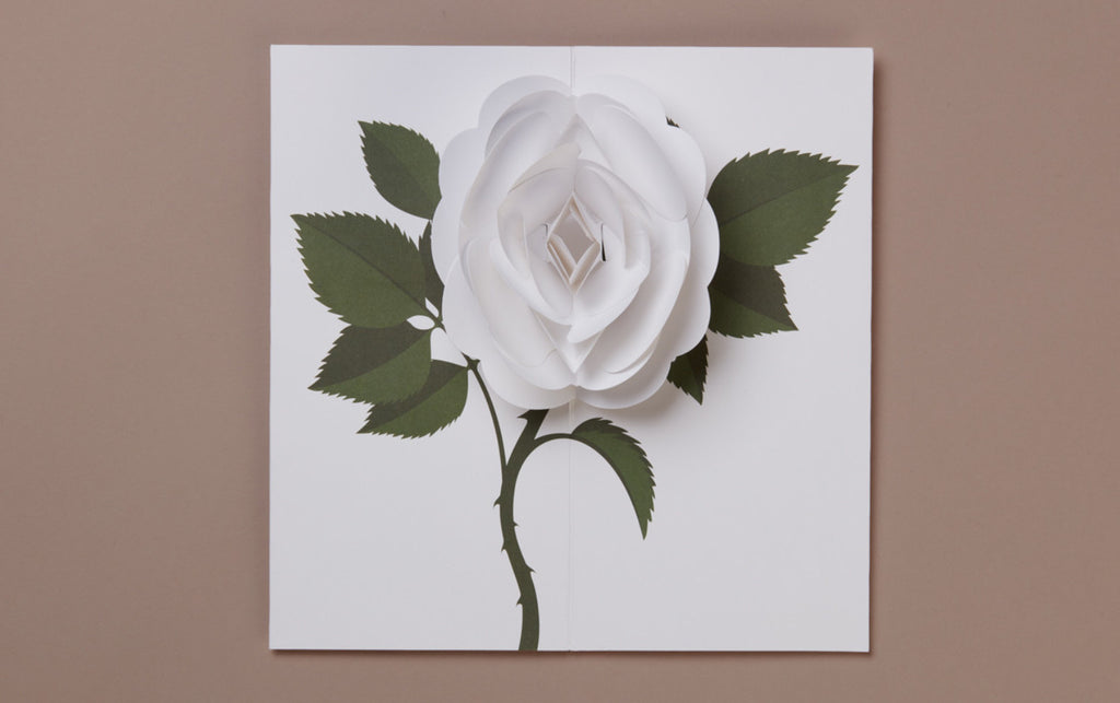 White Rose Pop-up card