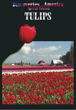 Discoveries America Special Edition Tulips focuses on everything about tulips- how they grow, the people that grow them, and the varieties they come in.