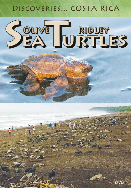 Disc Am Olive Ridley Sea Turtles front cover