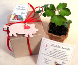 Recycled Ideas Favors plantable paper farm animals box set with plantable pots flower seed pigs chicks lambs rabbits farm birthday