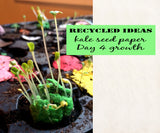 Recycled Ideas Favors sprouted kale