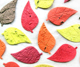 handmade seed paper birch leaves fall colors
