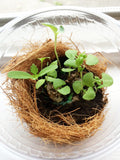 seed paper growing in a biodome cup by recycled ideas