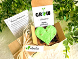 Cilantro Seed Starting  Kit with Plantable Paper and Pot