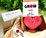 Zinnia Seed Starting  Kit with Plantable Paper and Pot
