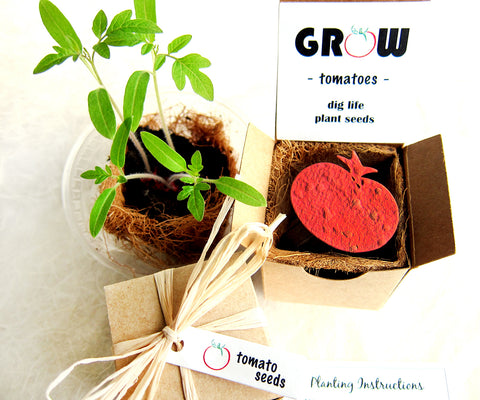 Seed Starting  Kit with Plantable Paper and Pot - Tomatoes, Basil and More