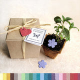 Recycled Ideas Favors gift box, pot and plantable paper heart and blossoms with cards
