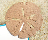 Recycled Ideas Favors plantable paper tan sand dollar