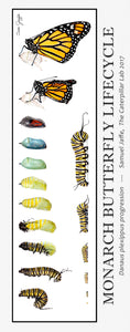 Monarch Lifecycle Poster 13x30""