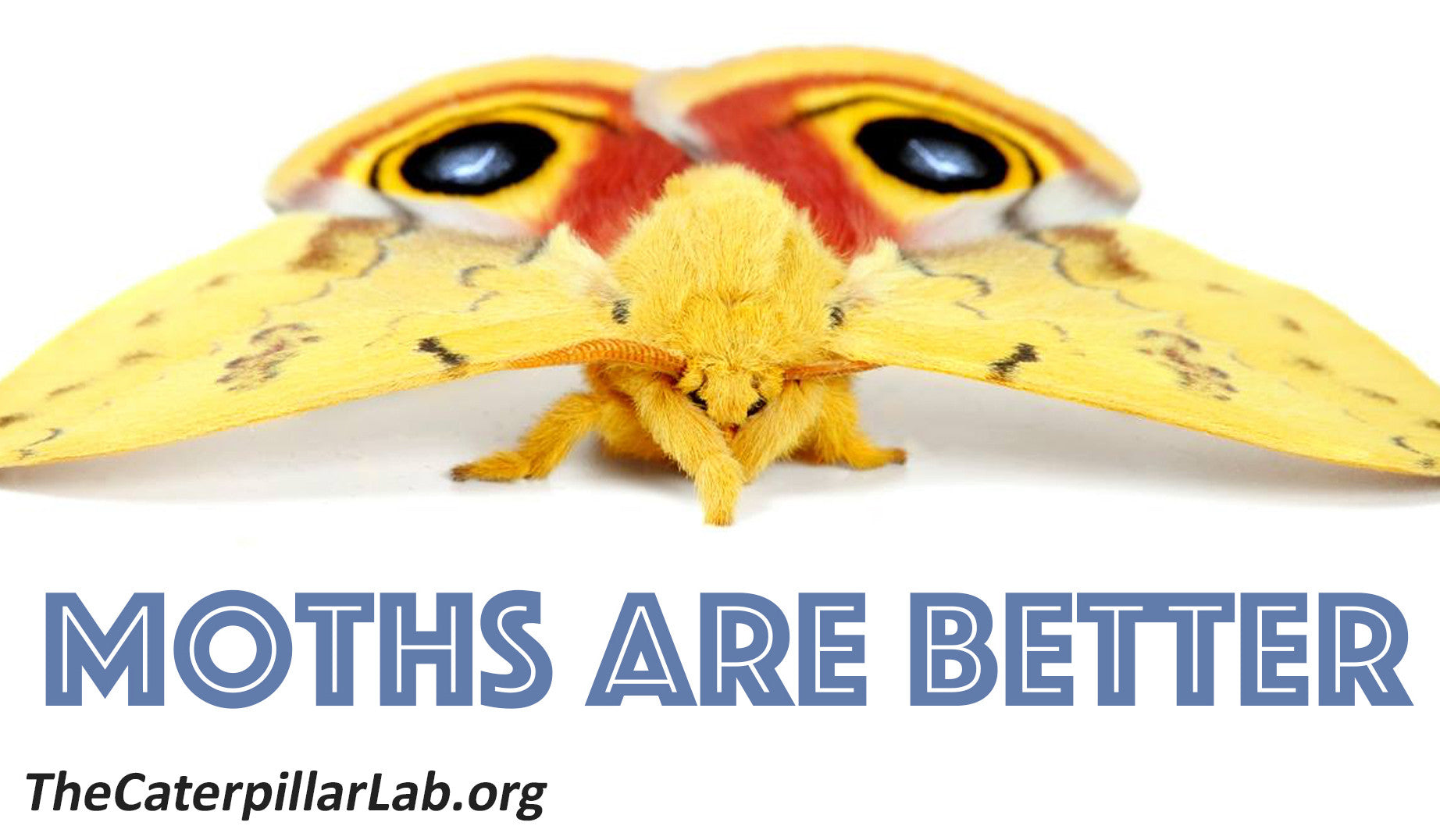 """MOTHS ARE BETTER"" Bumper Sticker"