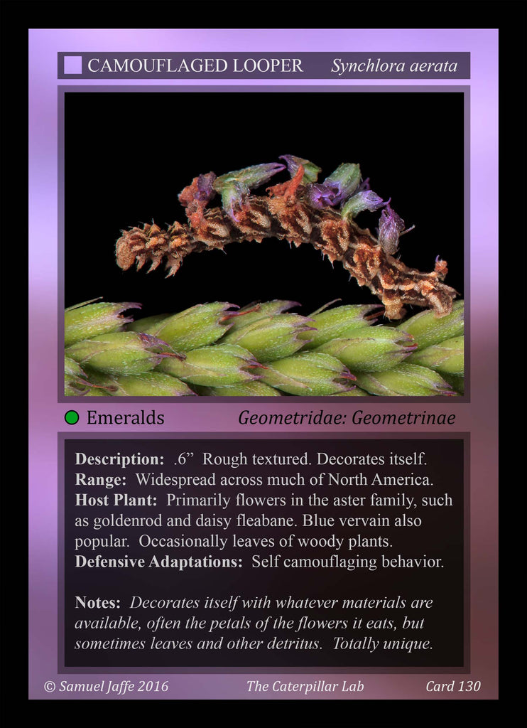 Caterpillar Trading Cards - 10 sets and 18 cards per set
