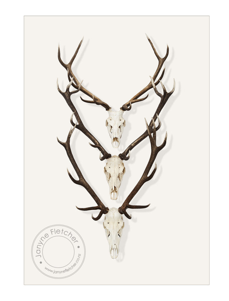 Unframed Photographic Print - Antlers x 3