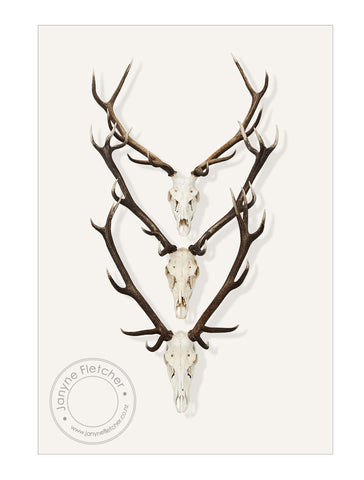 Framed Photographic Print - Deer Antlers, Central Otago, New Zealand