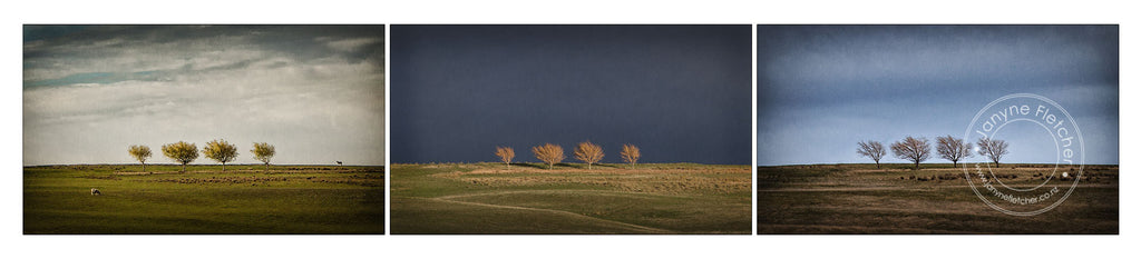 Framed Print - Trees at Wedderburn