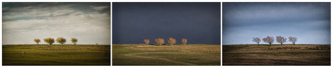 Unframed Print - Trees at Wedderburn, Central Otago