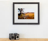 Framed Print - Tree at German Creek