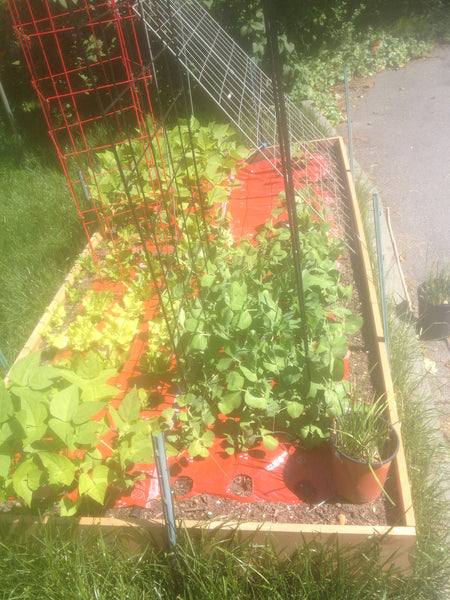 Home Garden - Beginner Vegetable Garden: Proven Highly Productive System