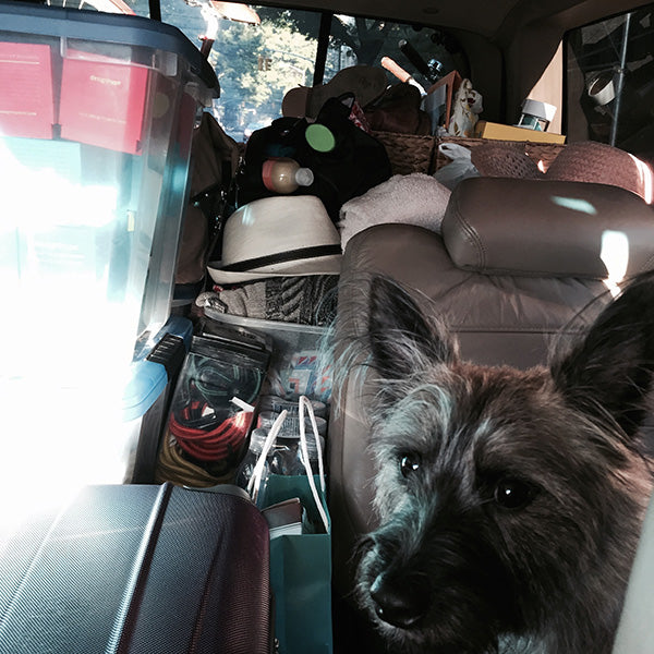 We set out on this cross-county road trip on July 31st, 2015. This is a picture of Winston in the Ford Explorer with the entire car packed.