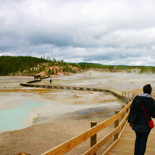 Walk along the many boardwalks created for visitors to meander through geothermal pools, springs and steam vents in Yellowstone National Park