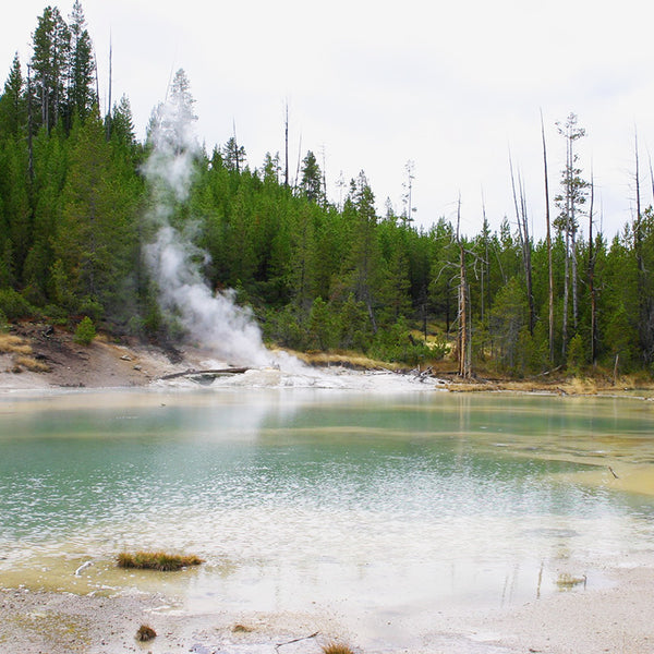Beautiful bright blue pools and steam vents can be found all over Yellowstone National Park