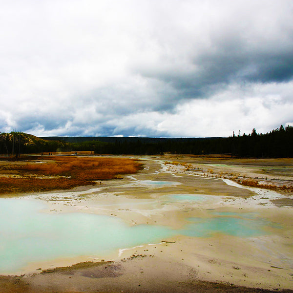 Vegetation is sparse around steam vents and geothermal pools in Yellowstone National Park