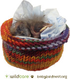 Baby Bird in Knitted Nest Tote Bag (+$25 donation)