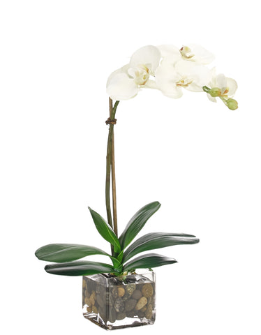 BP 04 Phalenopsis Orchid in Glass Container