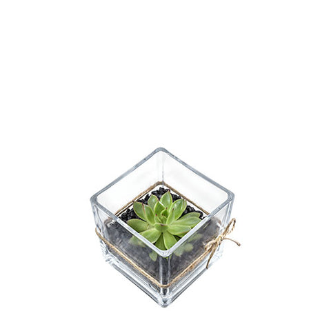 BP 02 Plants - Succulent in a glass cube