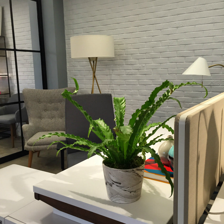 Indoor Office Plant Installation West Elm NYC Showroom by Anissa Rae Flowers