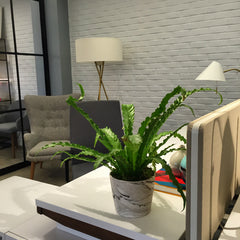Birds Nest Fern Plant for Weekly Corporate Flowers NYC