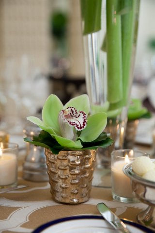 Cymbidium Orchid Cocktail Table Arrangement Anissa Rae Flowers