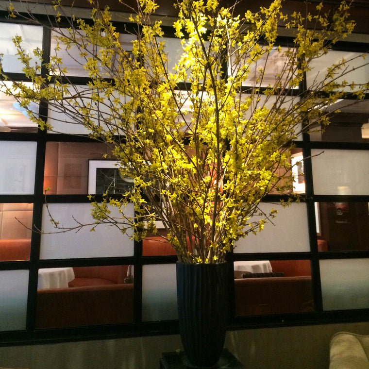 Forsythia Weekly Flowers Aretsky's Patroon restaurant by Anissa Rae Flowers New York City