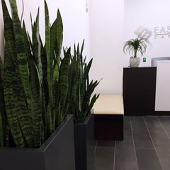 Office Plant Installation Corporate Flowers Snake Plants