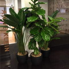 Office Plants NYC Florist Weekly Flowers Anissa Rae Plant Shop