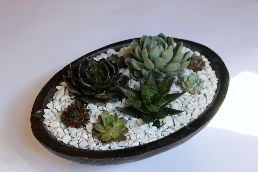 Succulent Garden in Wood Bowl Anissa Rae Flowers NYC